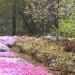 Le plus beau jardin