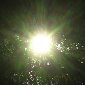 medium_Eblouie_vert_25-oct-06.jpg
