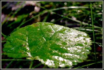 medium_Extase_vegetale_05-sep-06.jpg