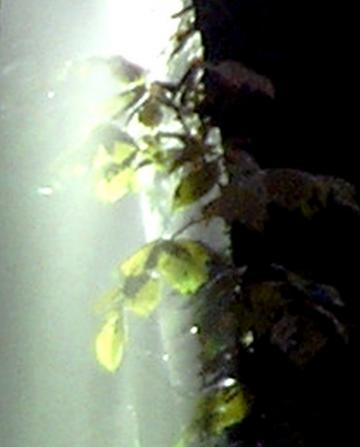 medium_Ombre_et_lumiere_20-oct-06.jpg