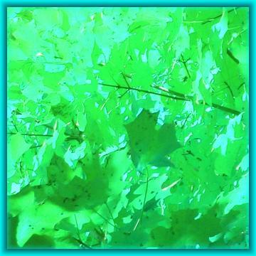 medium_automne_vert_21-oct-06.jpg