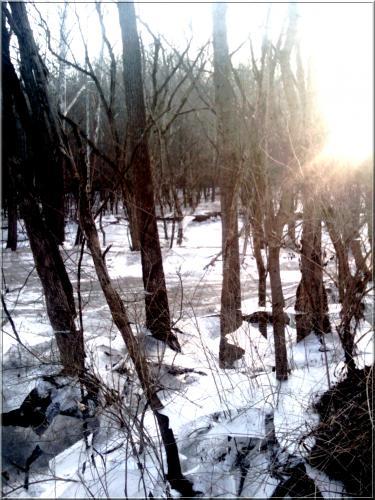 01-Feb-10 bris de glace.jpg