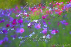 voeux 2009.jpg